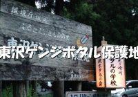 """大自然残る山形で観たいホタルの群生地""""東沢ゲンジボタル保護地""""への行き方"""