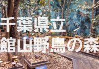 【写真で観る】木工体験や自然を散策しながら自然の生態を学べる「千葉県立 館山野鳥の森」を徹底解説!!