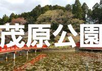 日本さくら名所100選に選ばれる千葉県茂原市の『茂原公園』へ潜入調査!
