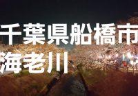 千葉県船橋市の桜並木が美しい『海老川ジョギングロード』へ潜入調査!