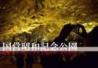 紅葉×ライトアップが人気のデートスポット『国営昭和記念公園』に行ってみた